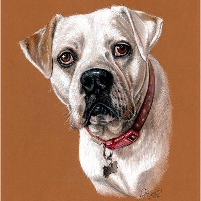 colour pencil portrait of a dog