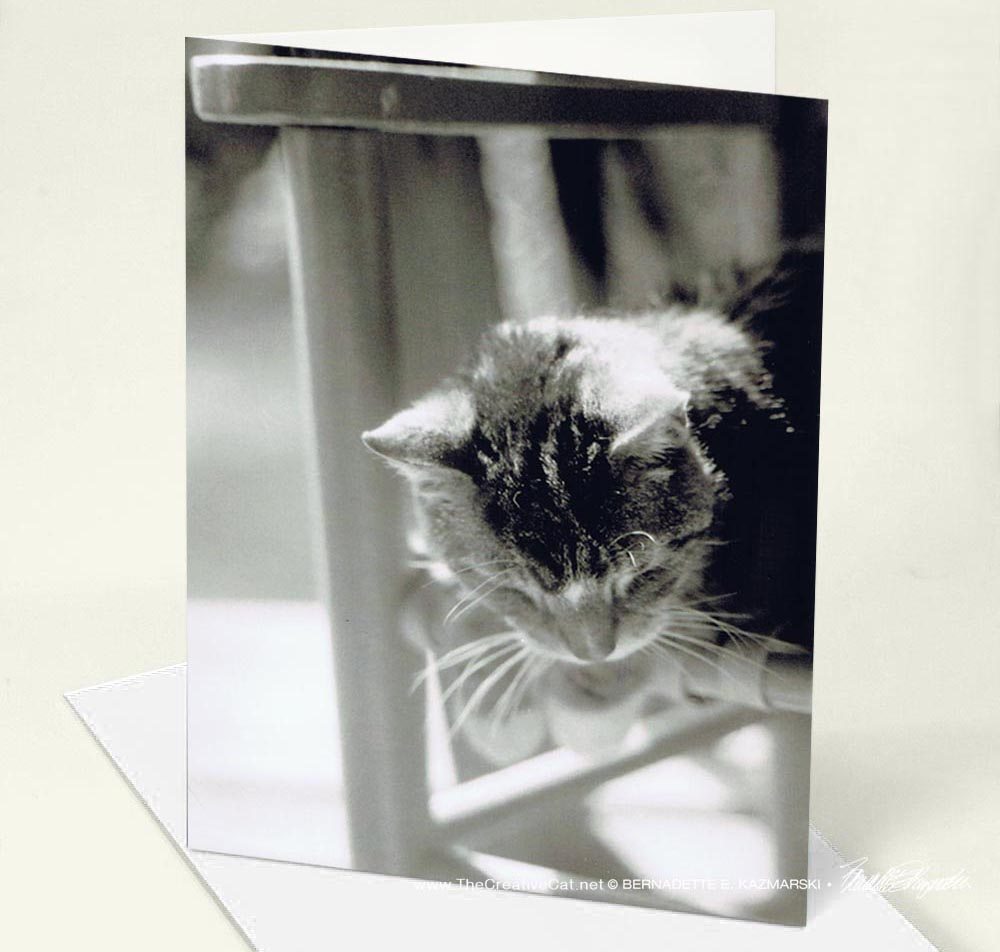 Feline Photos Greeting Cards