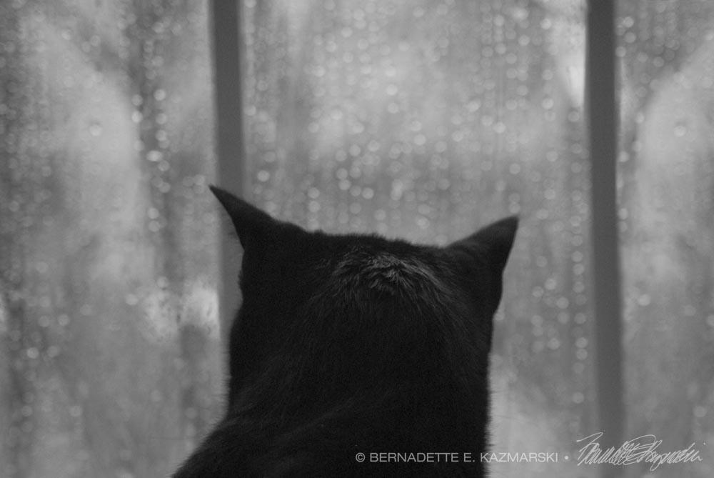 Of the Rain and Giuseppe