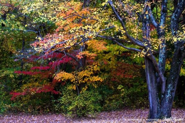 The Lichen Tree