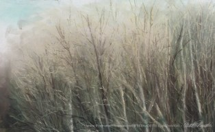Detail, treetops with mist.