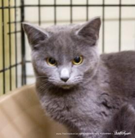The gray kitten's face.