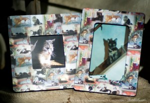 Wooden picture frames using 22 cats art paper.