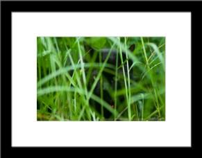 The Huntress: Listening, framed