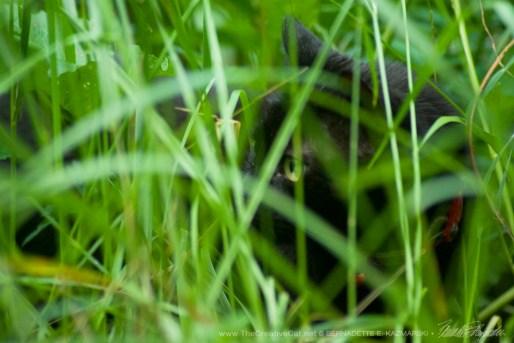 The Huntress: Watching, Photo