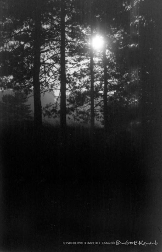 Moonlight Through the Pines