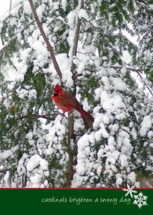 Cardinal in Yew