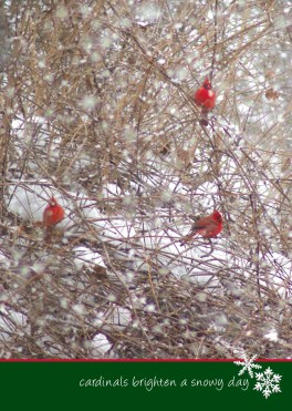 Cardinal in Brambles
