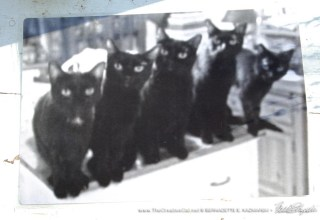 Five Black Cats in classic black and white.
