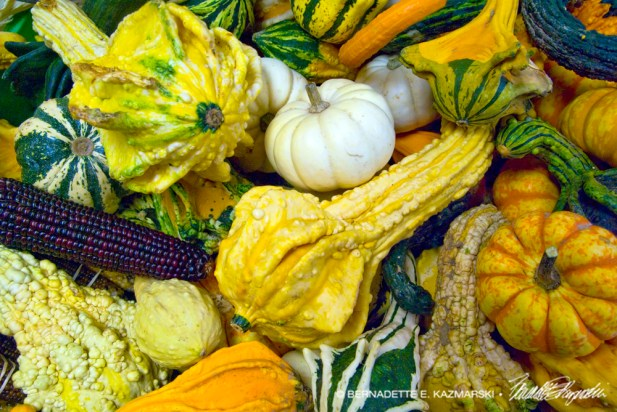 bedners-gourds-1000px