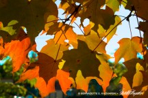 leaves-colors-1000px