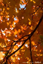 leaves-orange-1000px