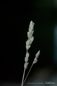 """Grass from """"The Light in the Darkness"""" series."""