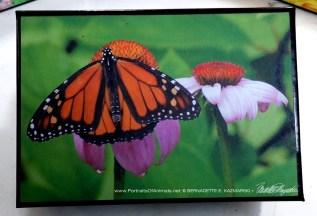 Monarch Habitat