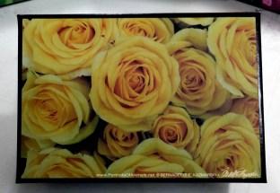 Yellow Rose Happiness