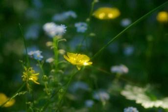 051911-Buttercup
