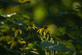 Backlit Bouquet