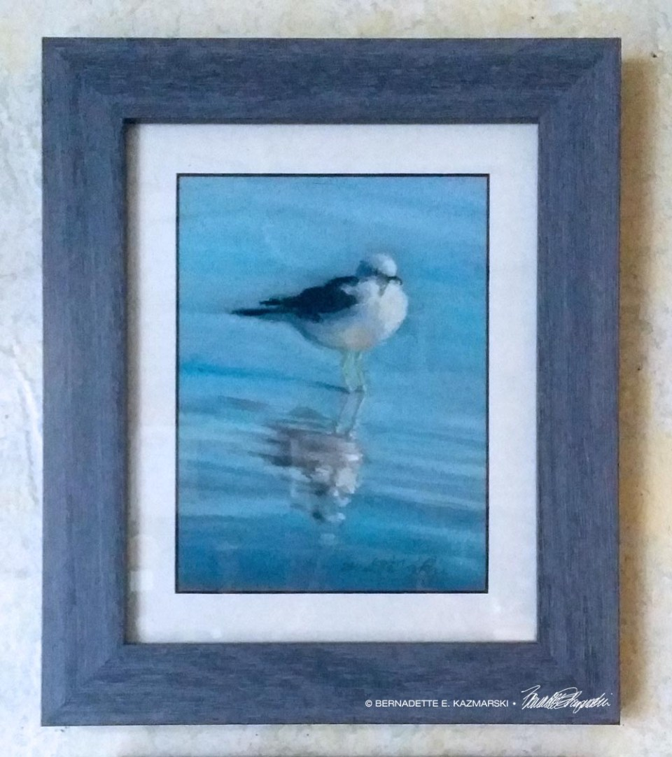 """Observant Gull"", framed."