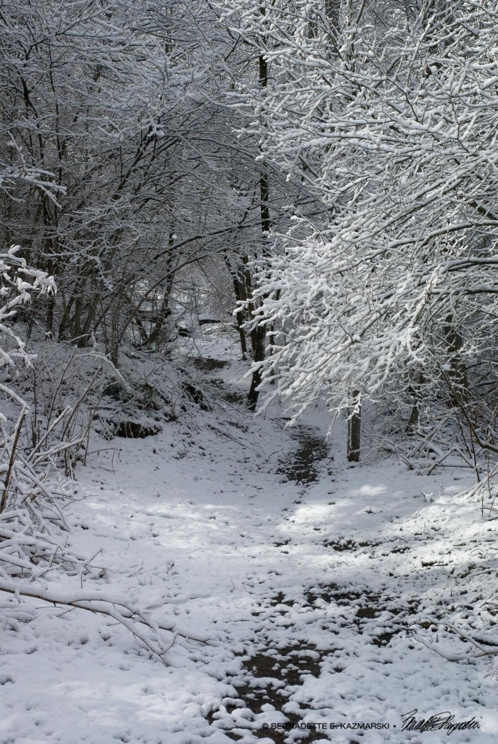 Trail24-1000px