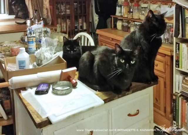 Cats expecting a good show.