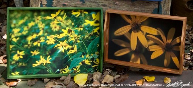 Trays featuring autumn photos.