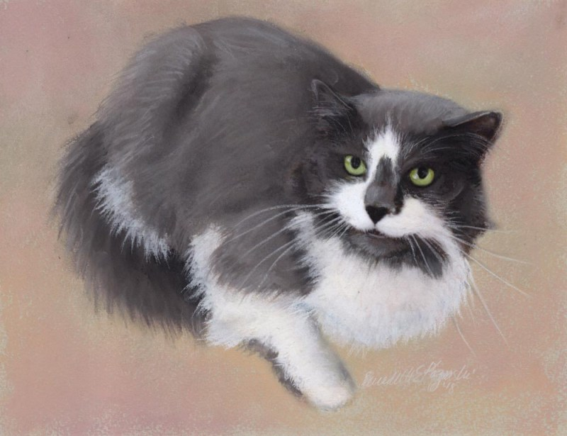 Commissioned Portrait: Pita ~ The Creative Cat