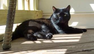 black cat in sun