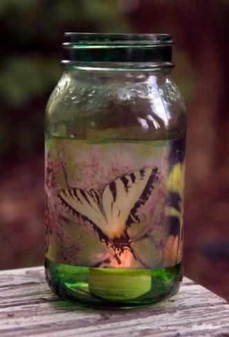 Butterflies Votive, small