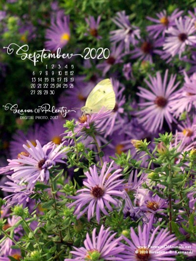 Desktop calendar, 600 x 800 for large mobile devices and tablets.