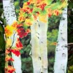 Garden Flag, Birches 1 Autumn Showers