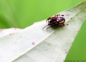 Portraits-of-my-Land-Spiders-6