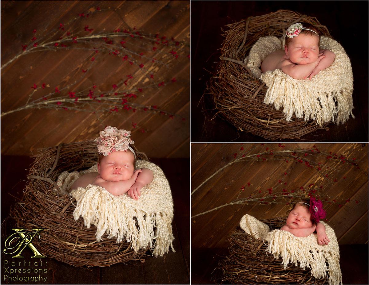 newborn portrait baby in nest