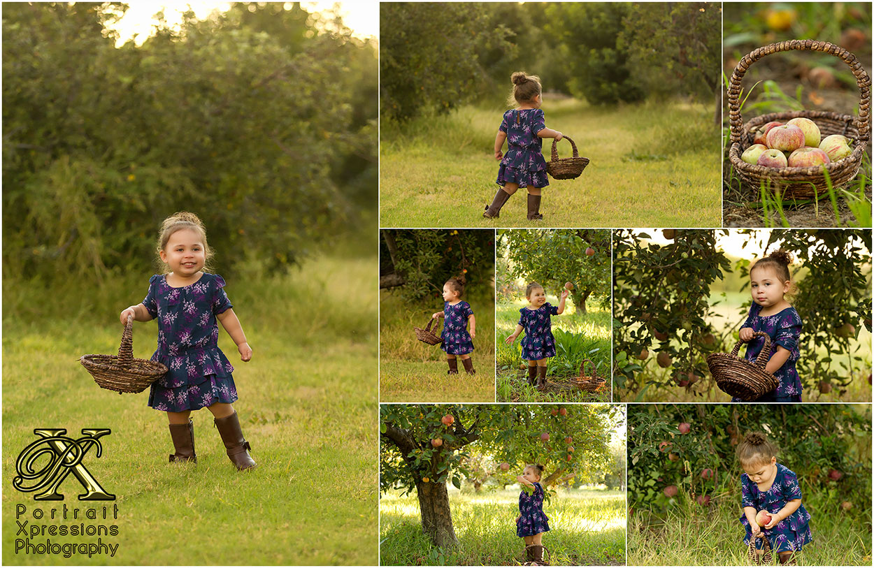 apple-grove