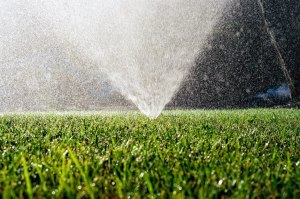 Ground level viewpoint of sprinkler spraying out of the grass.