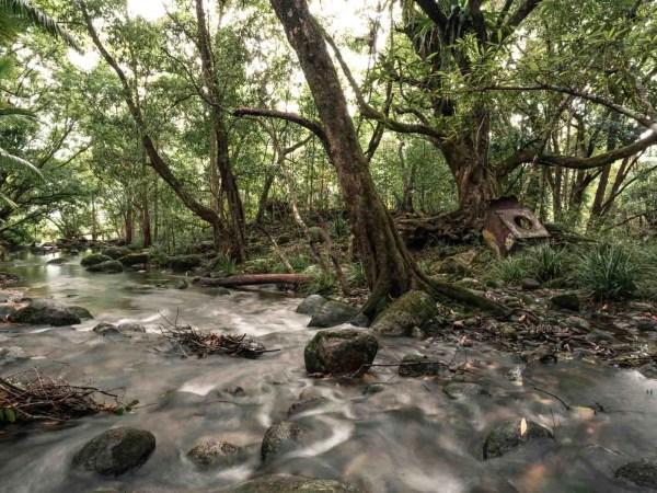 tropical rainforest landscape print