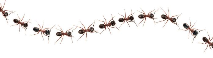 Πως να διωξω τα μυρμήγκια απο το σπιτι