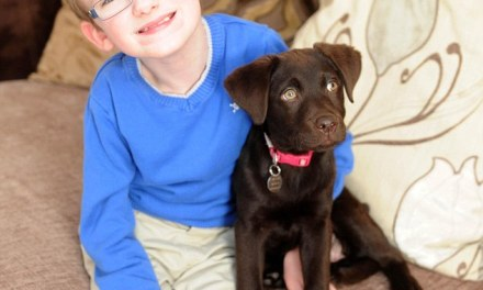 A boy's best friend: Seven-year-old with muscle-wasting condition forms inseparable bond with Labrador who helps him with everyday tasks