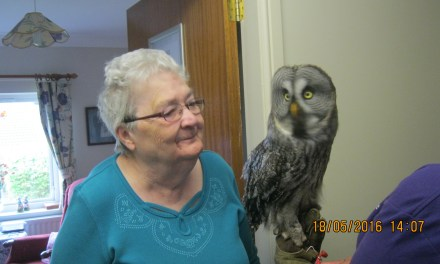 Owl visit is a real hoot for residents