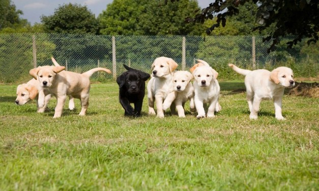 Guide Dogs National Breeding Centre