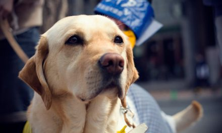 2018: The Year of the (Guide) Dog