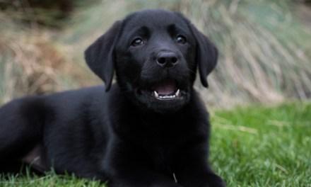 Breeder donates dogs to autistic children