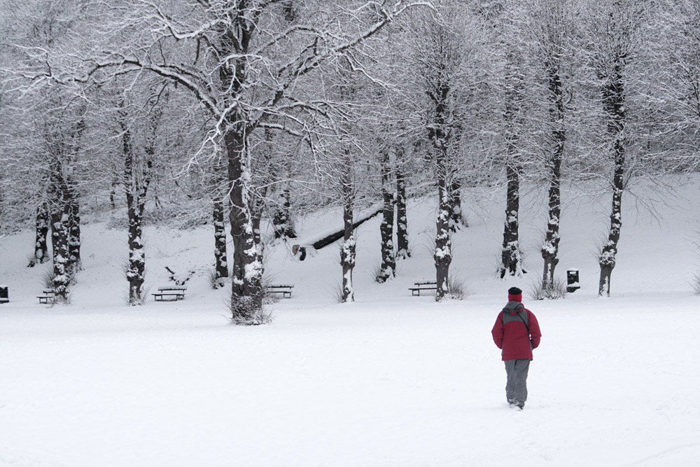A person walking in deep snow towards a group of trees