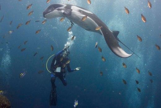 Scuba diving incentive travel