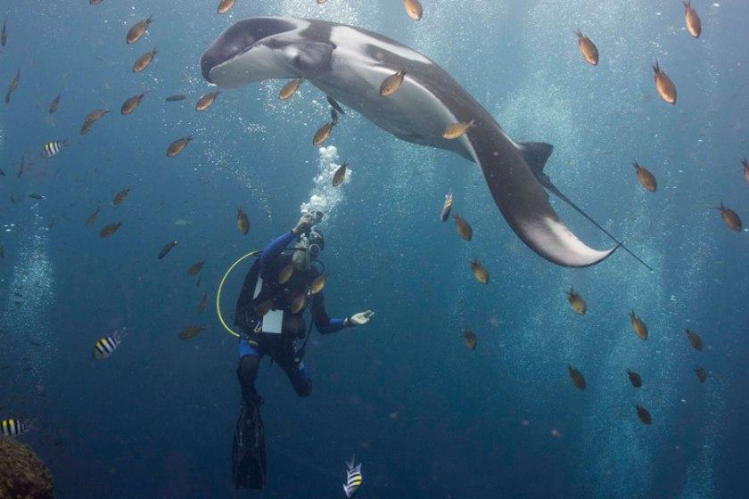 Voyage de motivation pour la plongée sous-marine