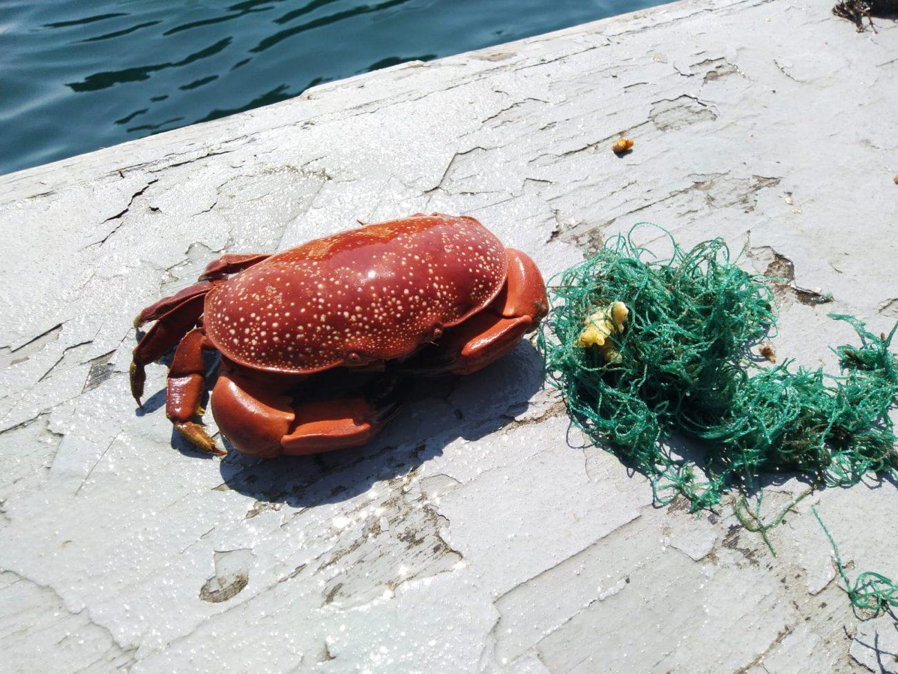 Abandoned fishing Net Koh Haa 1