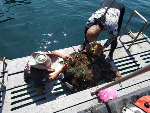 Passionné par le travail de plongée et de conservation marine?