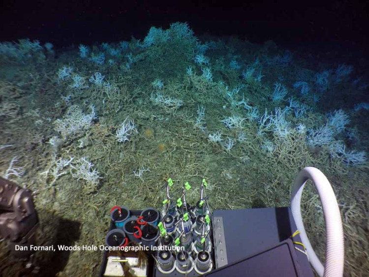 newly discovered coral reef