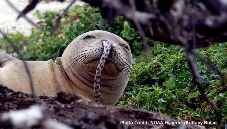 Eels in Seals