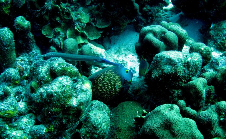 how fish feed - shadow hunting