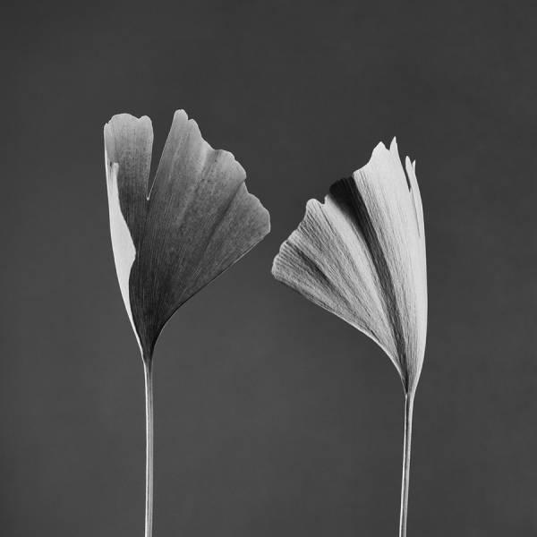 © Jean-Baptiste Huynh